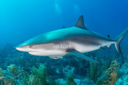 Shark là gì? Những điều thú vị mà bạn chưa biết về shark