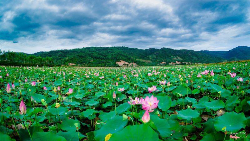 Hồ Sen Quy Nhơn