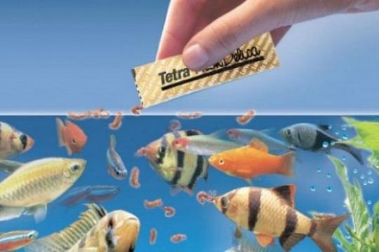 Review 5 loại thức ăn cho cá hữu ích cho sự tăng trưởng và phát triển của cá