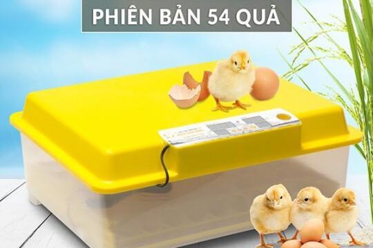 Review Top 5 máy ấp trứng mini- tăng năng suất, giảm chi phí