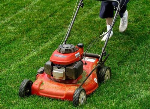 Máy cắt cỏ 2-1