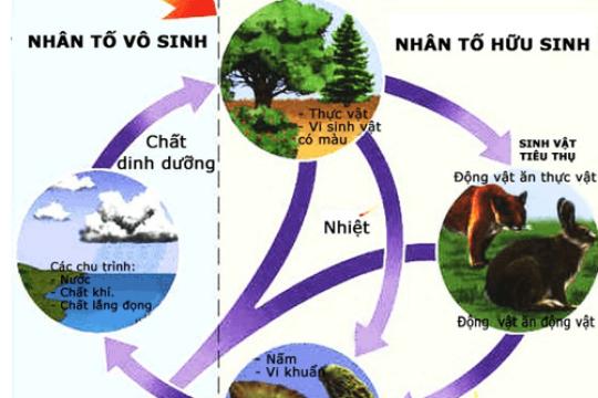 Nhân tố sinh thái là gì? Các loại nhân tố sinh thái trong tự nhiên