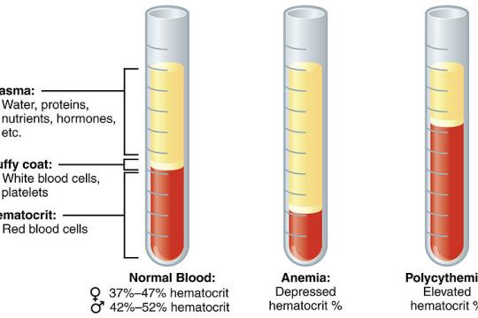 Hematocrit là gì? Chỉ số bao nhiêu là bình thường?