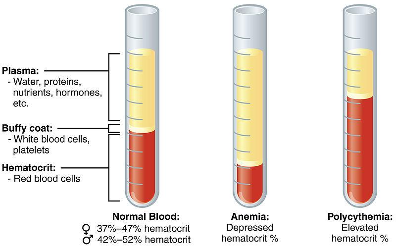 Nồng độ chỉ số hồng cầu trong máu
